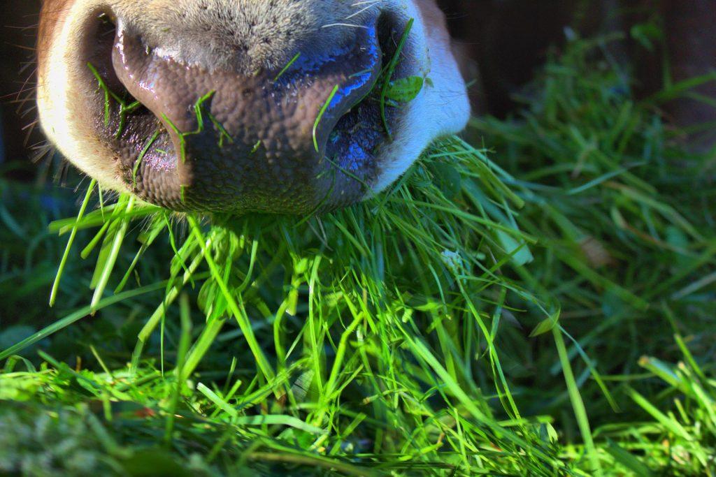Regionale Herkunft - auch beim Rindfleisch Vertrauenssache